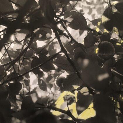 Zitronenbaum /// coloured print (12,5x8 cm)
